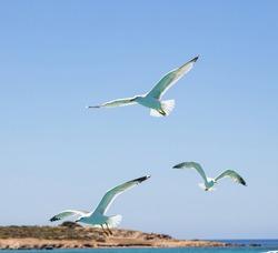 Flying seagulls open wings, blue sky and sea background. European herring gulls flock, Greek island landscape, Aegean sea Greece. Summer holidays at Cyclades