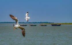 Flying seagulls over Ganga River