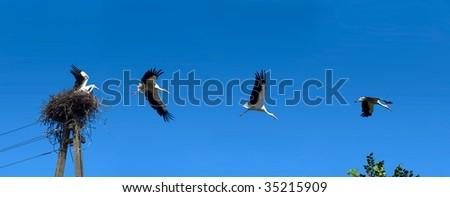 flying stork set