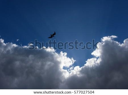 Flying to glory #577027504