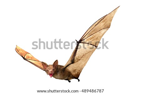 Flying Vampire bat isolated on white background, 3D rendering