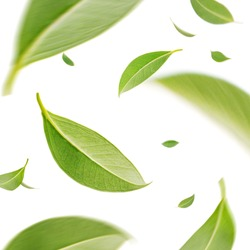 Flying whirl green tea leaves in the air, Healthy products by organic natural ingredients concept, Studio shot isolated on white background
