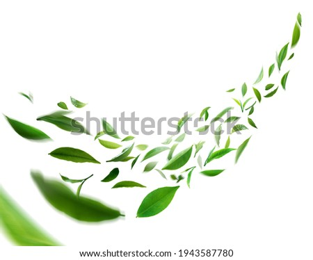 Flying whirl green tea leaves in the air, Healthy products by organic natural ingredients concept, Empty space in studio shot isolated on white background long banner Stock photo ©