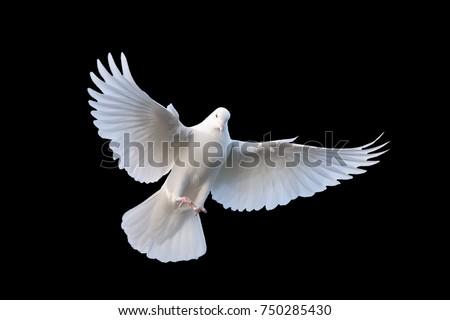 Flying white doves on a black background #750285430