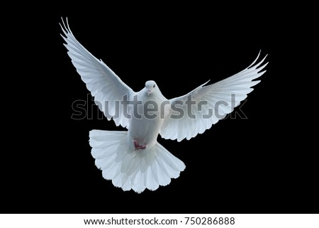 Flying white doves on a black background #750286888