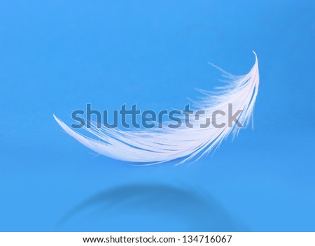 Flying white feather on blue background