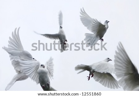 Flying white pigeons - stock photo