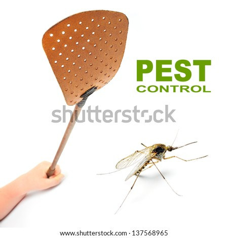 Entrevistado da AG - Ruddy - Página 2 Stock-photo-flyswatter-and-mosquito-ecological-pest-control-picture-with-space-for-your-text-137568965