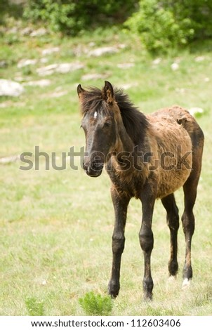 Foal Horse on green meadow - stock photo