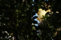 Focus of Buddha figure Face Hidden Behide Leaves