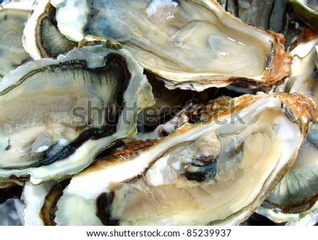 Focus on a plate of oysters