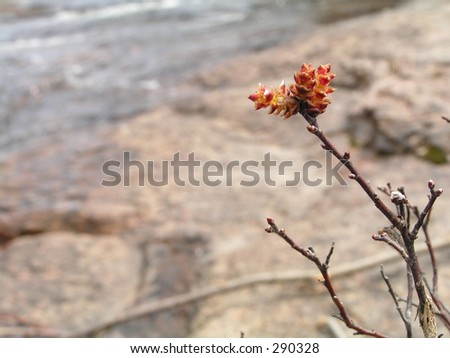 focus on blooming plant with rocks and water in the background