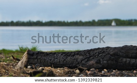Focus on foreground of an burned log on a beach #1392339821