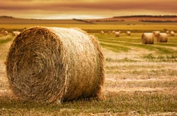 Focus on hay bale in the foreground in rural field