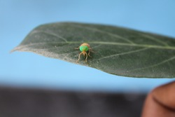 Focus on leaf with hopper and blur motion background cover photo