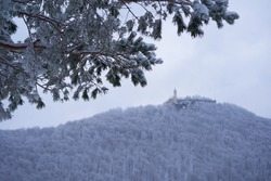 Focus on Pine Branches. Castle also Stronghold (Teck) in winter on a gray cloudy morning, many trees on the hill, pine branches with snow in the foreground. Germany, Owen, Swabian alb.