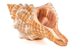 Focus stacking of a sea shell on white background