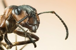 Focus Stacking - Wood ant, Ant, Ants