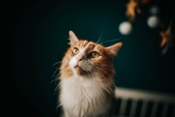 focused cat with green eyes in apartment.