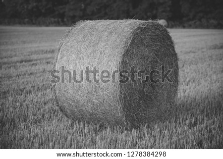 Fodder, forage, haymaking. Hay bale dry on field, agriculture. Agriculture, farming, ecology. Harvest, crop, harvesting. Haylage rolled on cut grass, fodder. #1278384298