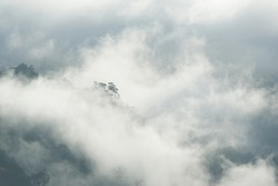Fog and cloud mountain valley spring landscape