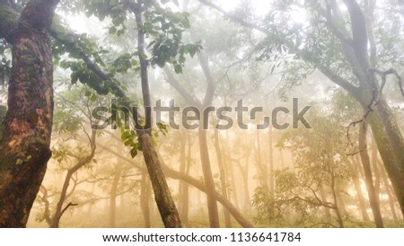 fog and forest #1136641784