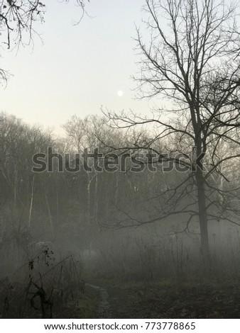 Fog and mist #773778865