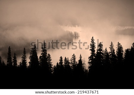 Fog and pine tree on rugged mountainside during storm #219437671