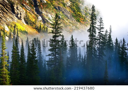 Fog and pine tree on rugged mountainside during storm #219437680