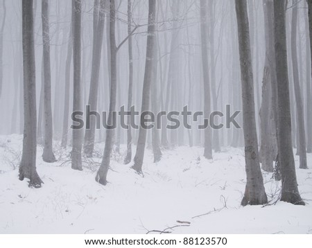 Fog and snow in a winter young beech forest