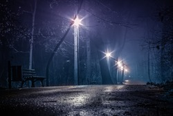 fog at night in the park