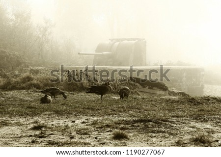 Fog, cannons and militaria landscape