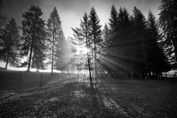 Fog clouds playing with sun in a forest in Switzerland