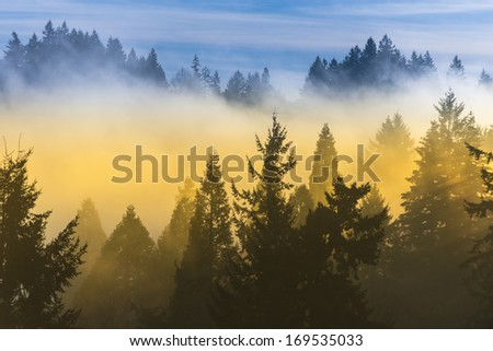 Fog covered trees in the valley with bright blue sky