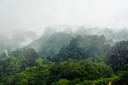 Fog Covering the Forest on a Limestone Mountain