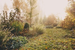 fog in early morning in late autumn or winter garden. Frosty beautiful rural view with pathway, lawn and plants.