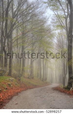 stock-photo-fog-in-forest-52898257.jpg
