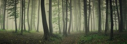 fog in green forest, forest panorama landscape