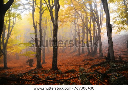 fog in the forest, autumn