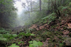 fog in the green forest among the trees in the summer