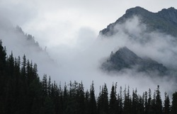 Fog in the mountains, Siberian taiga on a misty morning