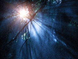 Fog in the mysterious rainforest, sun rays are shining through high dark trees, tropical woods, dangerous travel concept