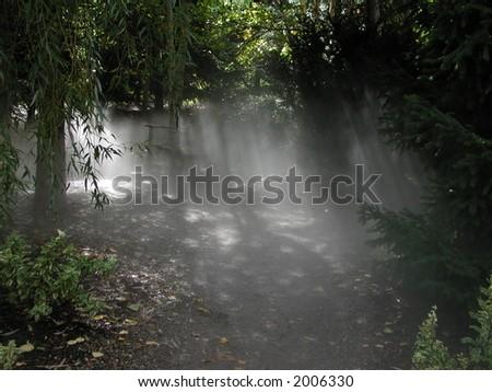 Fog in the Park #2006330