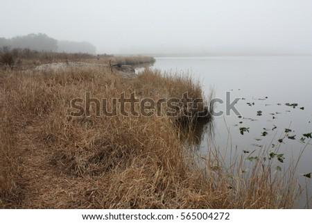 fog lake #565004272