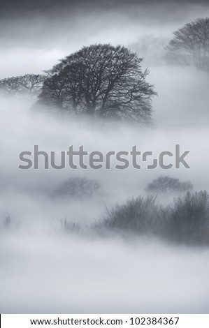 Fog lies thick between the trees of Sherriff Wood, at the foot of Eyam Moor from Surprise View in the Peak District.