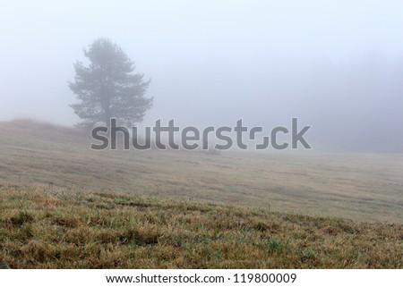 Fog on an autumn field