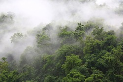 Fog on the forest with dense trees,bird eyes view fog forest in nature
