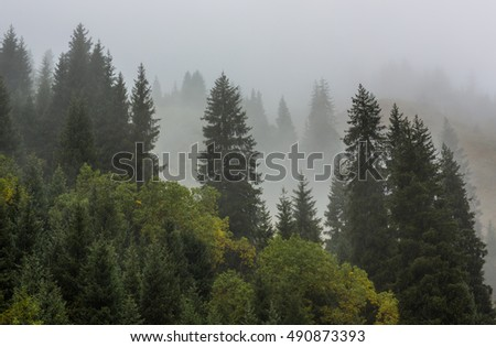 fog on the mountain slopes with fir trees, autumn, spring #490873393