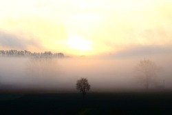 fog on the swampland in the Eifel during autumn