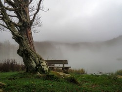 Fog over Lake Pranda in the Apennine mountains, Italy. With bench and tree. Tranquil melancholic background ideal inspirational message.